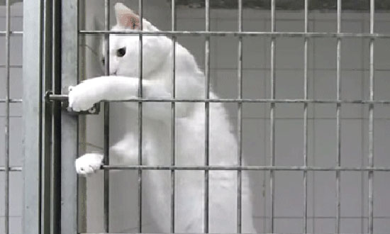 Extremely smart cat picks a lock and breaks out of the cage better than James Bond