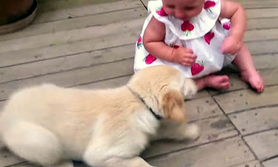 They Left Their Baby Alone With Their Newly Adopted Puppy for a Moment and THIS Happened!
