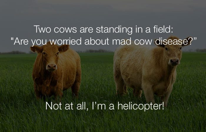 Stupid Jokes - Two cows are standing in a field. One cow says...