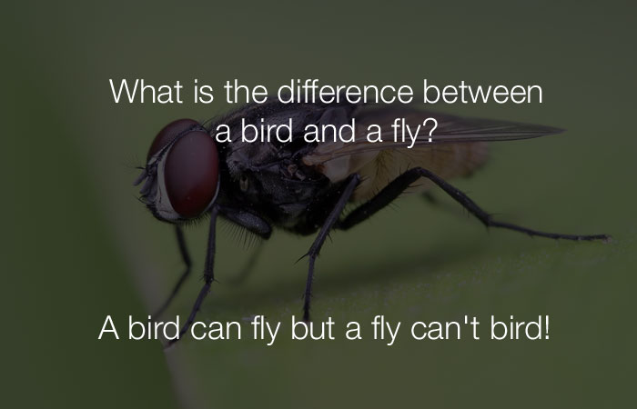 Funniest Jokes - What is the difference between a bird and a fly?
