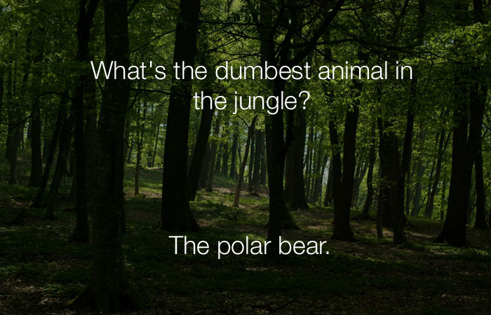 Hilarious Jokes - What's the dumbest animal in the jungle?