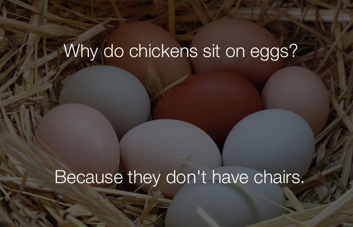 Funny Jokes - Why do chickens sit on egg?