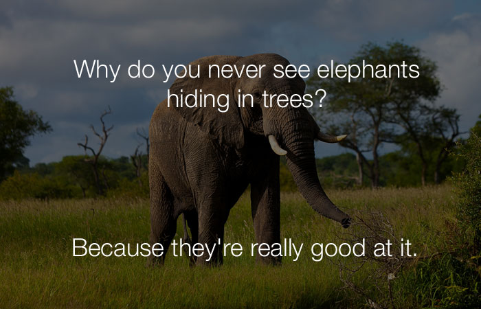 Hilarious Jokes - Why do you never see elephants hiding in trees?
