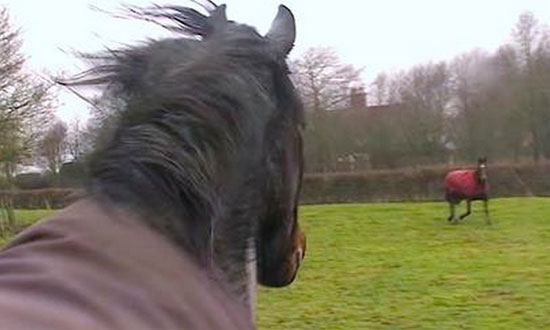 Watch what happens at the moment when this horse get reunited with his buddies after 4-years!