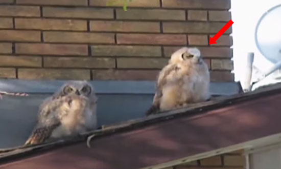 These Two Owls Were Best Friends Until One Did Something Unforgivable. Now I Can't Stop Laughing!