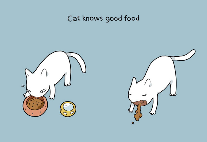 Advantages of Having a Cat - Cat knows good food