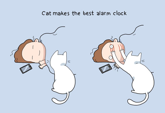 Benefits of Having a Cat - Cat makes the best alarm clock