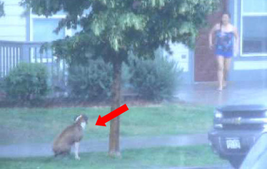 His Cruel Owner Left Him Out in The Storm. but Then a Brave Neighbor Does This