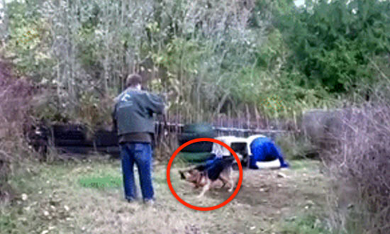 Vicious Dog Spent His Whole Life Chained. Watch What Happens When a Stranger Removes His Chain