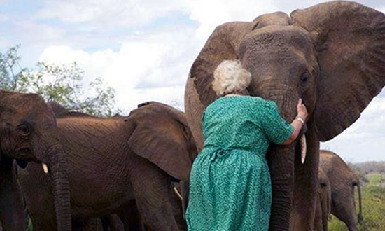She Spent Her Life Rescuing Elephants and This Is How They Pay Her Back!