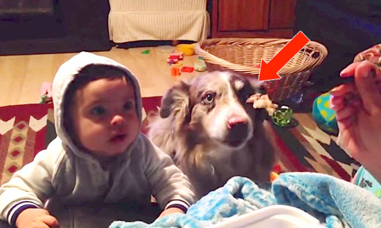 This Mom Is Asking Her Baby to Say 'Mama', but Keep Your Eye on The dog… This Is Hilarious!