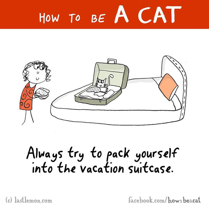 How To Act Like A Cat - Funny Illustrations