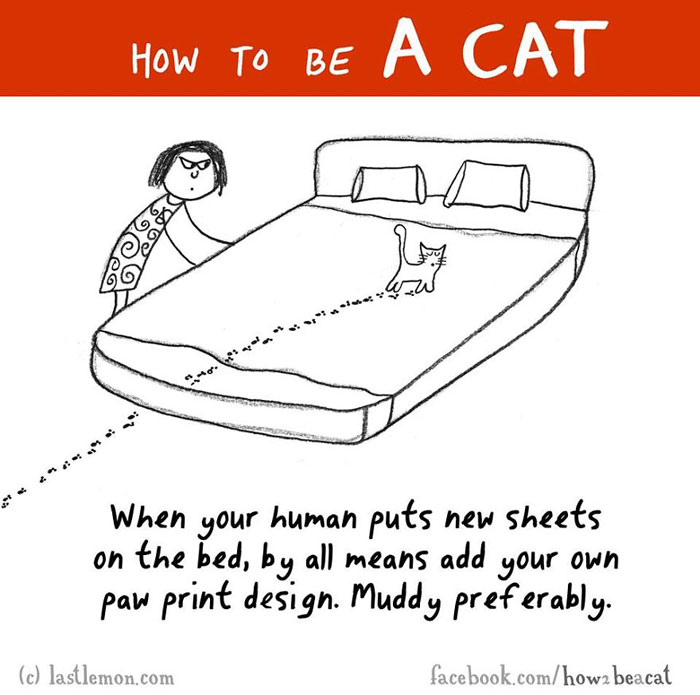 How To Be A Cat For Dummies