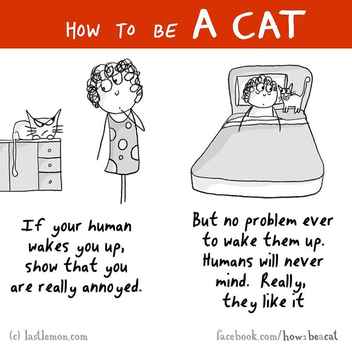 How To Behave Like A Cat - Funny Guide