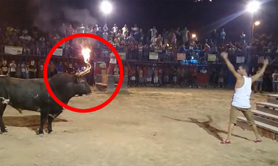 This Idiot Provoking Bull With Flaming Horns Got More Than He Bargained For!