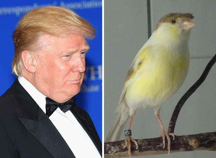 Things Resemble Trump's Hilarious Hair Style