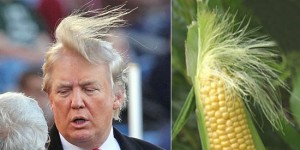 38 Hilarious Things That Look Just Like Donald Trump's Magical Hair