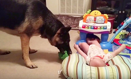 They Left Their Baby With Their German Shepherd And THIS Happened!