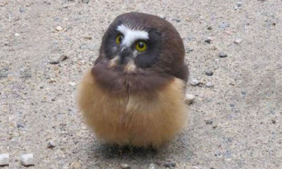 Baby Owl Getting a Talking-to From a Police Officer Is the Cutest Thing You Will See Today