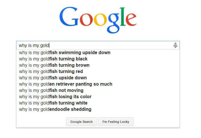 Hilarious Google Search Suggestions - Why is My Goldfish Turning Black