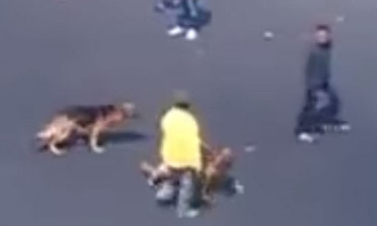 This Guy Thought Throwing Bricks at Dogs Are Fun, But Regretted It Immediately!