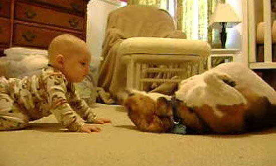 Baby And This Dog Meeting For The First Time And It's Too Darn Cute!