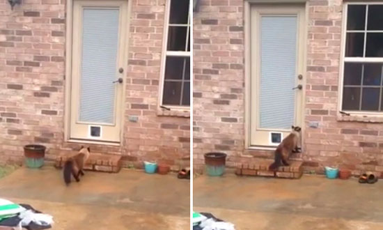 He Spent Hours Installing a New Special Cat door… but the Cat Does THIS Instead