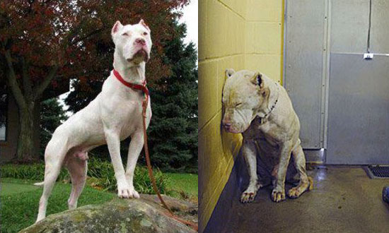 This Depressed Dog Thought He Deserved To Die. He Was Beautifully Proven Wrong!