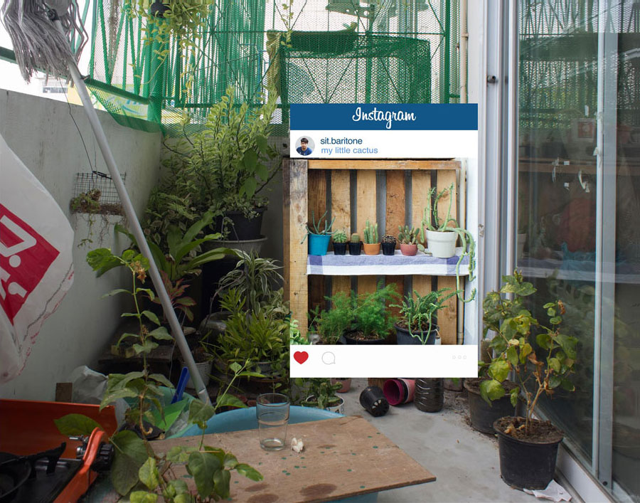 The Reality Behind Every Amazing Instagram Photos - Time to take care of my little indoor garden. it's alot harder than an outdoor one.