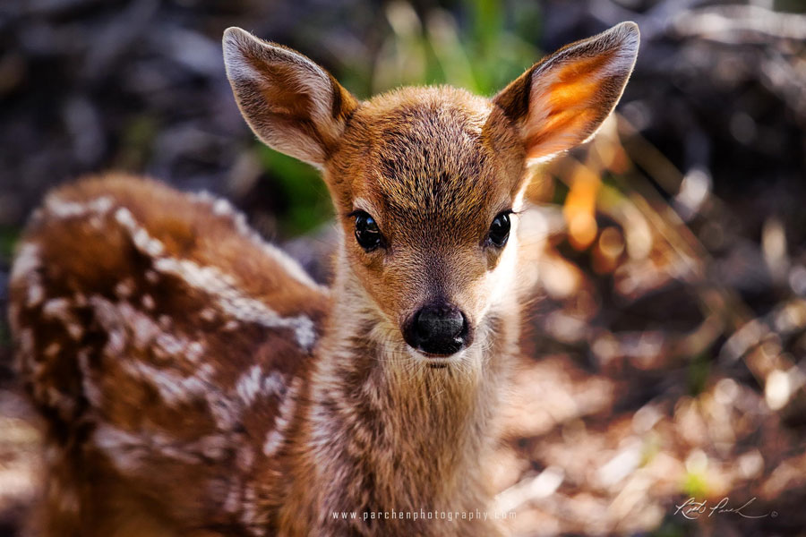 Cute Baby Animals - Baby Deer