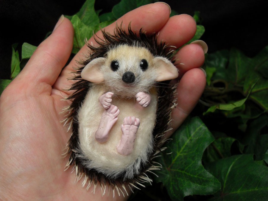 Baby Animals - Baby Hedgehog