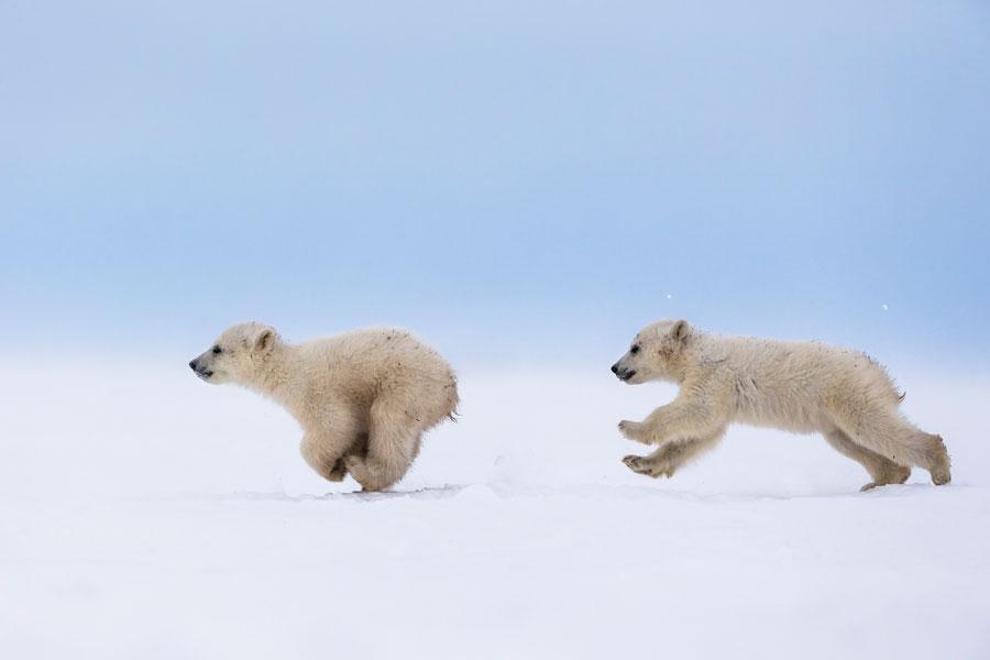 Cute Baby Animals - Baby Polar Bear