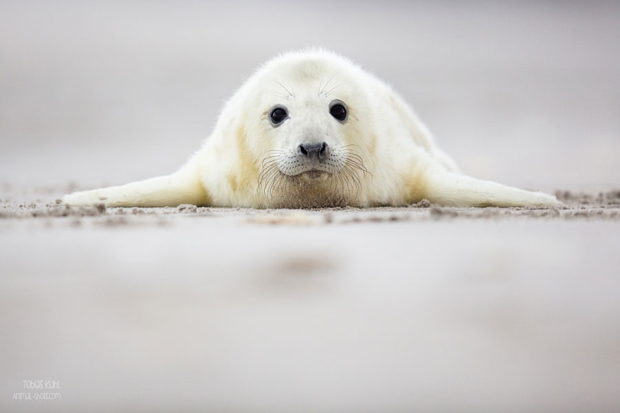 Cute Baby Animals - Baby Seal