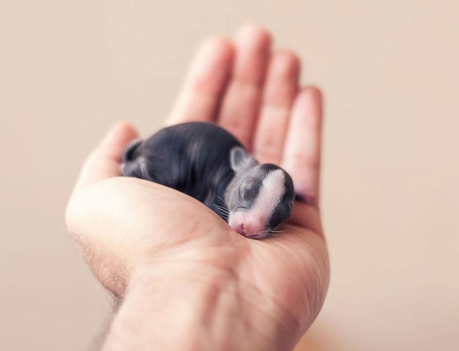 Baby Animals - Bunny