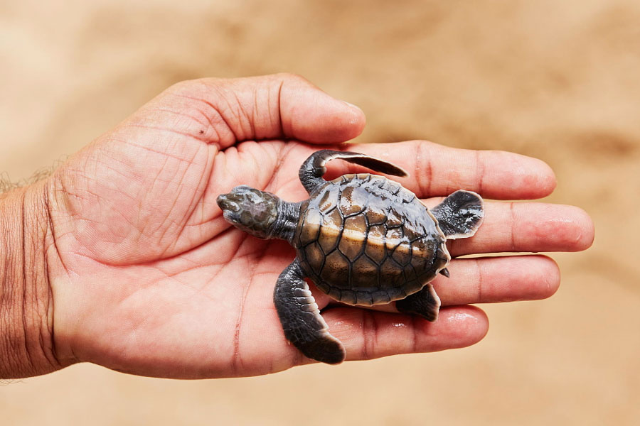 Cute Animal Pictures - Hatchling