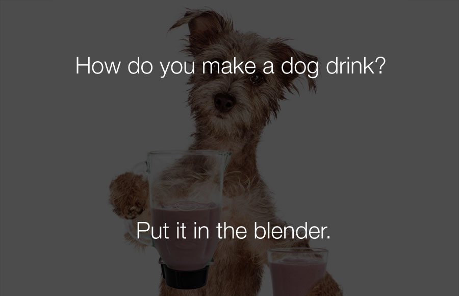 Funny Jokes - How do you make a dog drink.