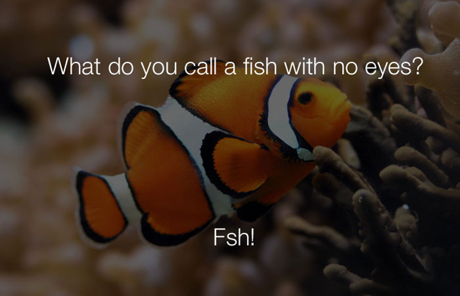 Funniest Jokes - What do you call a fish with no eyes.