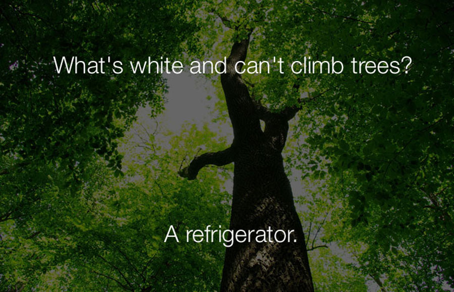 Hilarious Jokes - Whats white and cant climb trees.