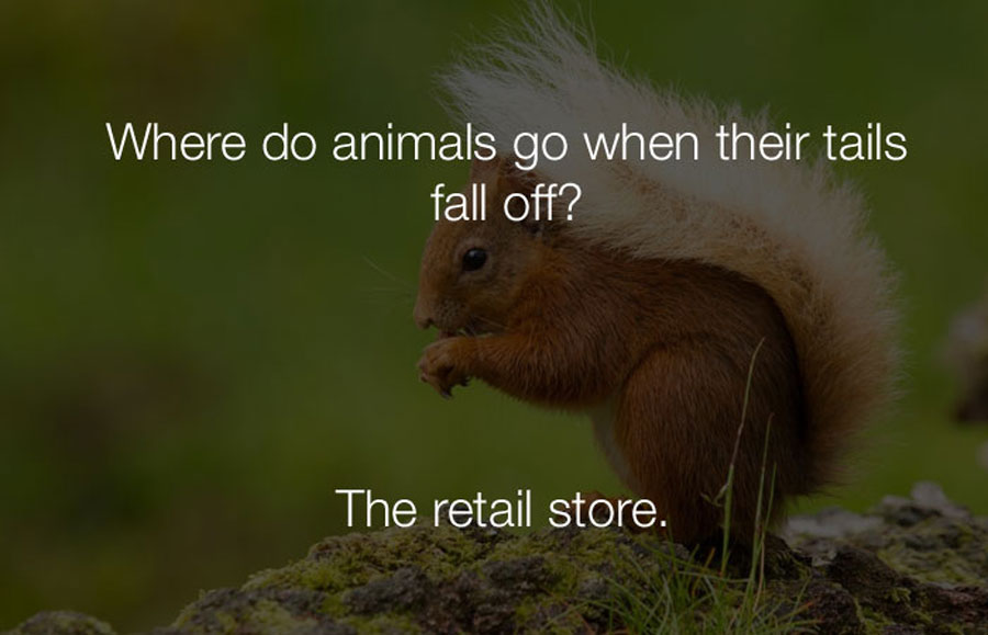 Funny Jokes - Where do animals go when their tails fall off.