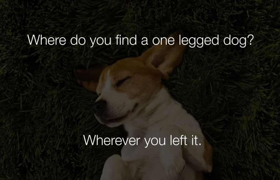 Hilarious Jokes - Where do you find a one legged dog.