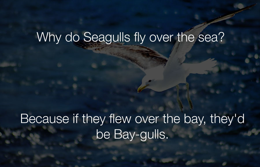 Funniest Jokes - Why do seagulls fly over the sea.