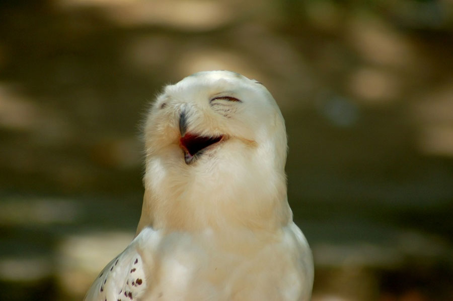 Animals Laughing Pictures