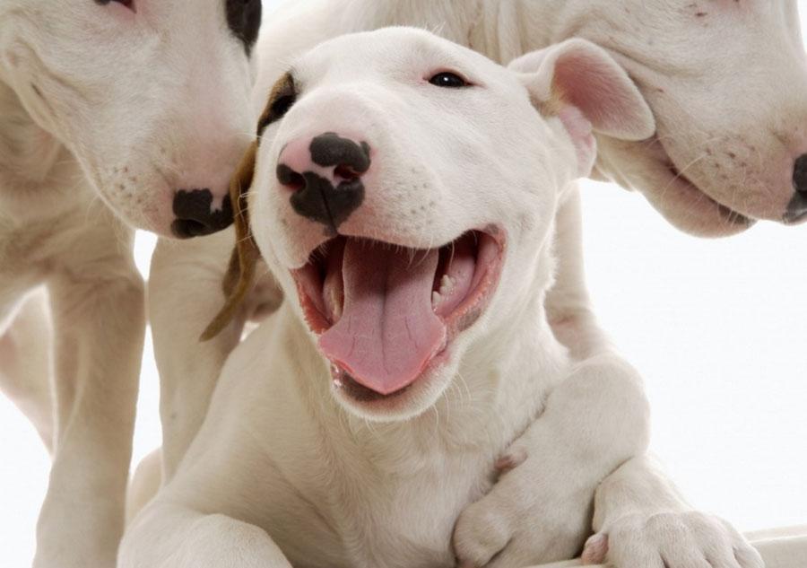 Laughing Animals Photos