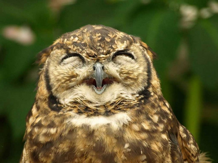 Funny Pictures of Animals Laughing