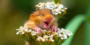 49 Funny Pictures of Animals Laughing Will Brighten Up Your Day