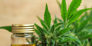 Why You Should Consider Using CBD Oil