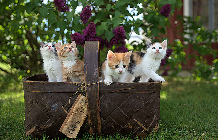 Equipments for Cats