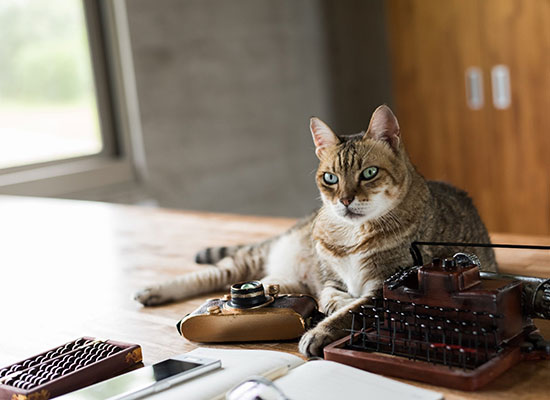 Latest Equipment That Can Help You Keep Your Cat in Tip-Top Shape