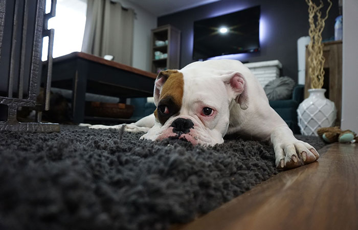Flooring for Pet Owners