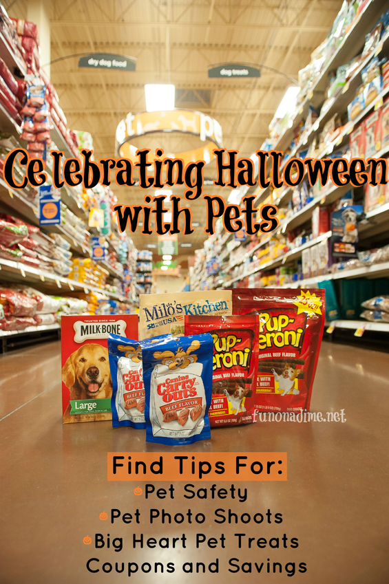 Celebrating Halloween with Pets – Tips, Tricks and Treats